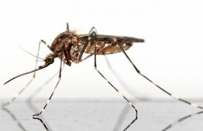 איך להרחיק יתושים באופן ידידותי לנו ולסביבה